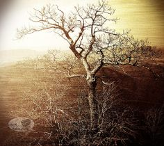 ~ Tree With No Leaves ~