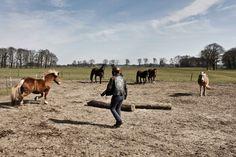 Marjan's paardenschool Cow, Animals, Animales, Animaux, Animal Memes, Animal, Animais, Dieren