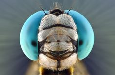 Автор фотографии: Yudy Sauw.Улыбка стрекозы.