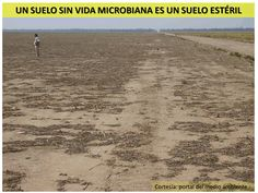 Impacto del PRV Sobre el Ecosistema