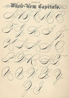penmanship flourishes from Palmer. This specimen is labeled Whole-Arm Capitals. I think one of the assumptions about calligraphy is that it's a tight-fisted, uptight craft. On the contrary, to get really good at it you have to be relaxed, and use your wrist and elbow.