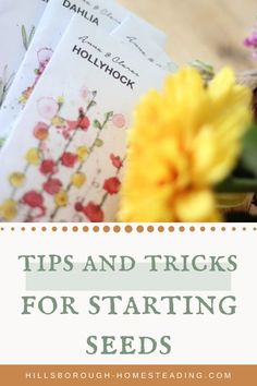 Start your vegetable garden off on the right foot by starting your own seeds indoors! Here are my best tips and tricks for seed starting success that I've used on my homestead for years. Check out this post to learn how to start your garden indoors and you'll be moving your garden outdoors and harvesting in no time! | Hillsborough Homesteading  #gardening #plants #vegetablegarden #homesteading #diyhomestead Starting A Garden, Seed Starting, Gardening For Beginners, Gardening Tips, Growing Flowers, Planting Flowers, Olive Tattoo, Popular House Plants, Starting Seeds Indoors