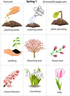 Free printable spring flashcards