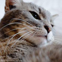 My princess! #cat #melaniedelon