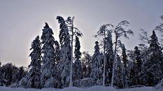 Photographers flock to Riding Mountain National Park to capture winter wonderland