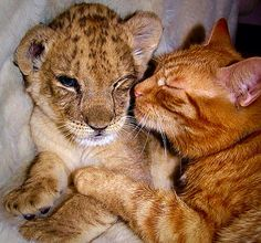 Cub and kitten