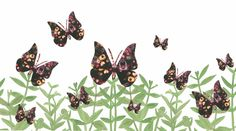 Black Butterflies by Sarah Millin