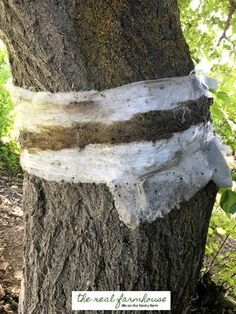 How to keep the bugs out of your organic fruit trees | The Real Farmhouse
