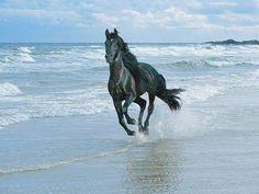beautiful horse runing on a beach