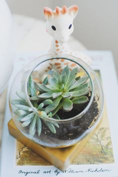 Brass Base Terrarium from west elm