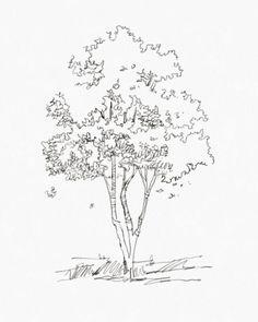 - Landscape And Urbanism Architecture - Paisagismo Sketchbook Architecture, Landscape Architecture Drawing, Landscape Sketch, Landscape Drawings, Urban Landscape, Architecture Plan, Plant Sketches, Tree Sketches, Drawing Sketches