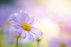 Sunshine by Jacky Parker on 500px