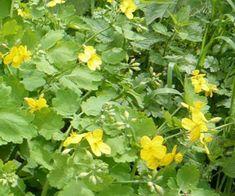 Herbalism, Herbs, Organic, Garden, Plants, Life, Health And Fitness, Herbal Medicine, Garten