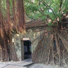 """安平樹屋 Anping Treehouse #treehouse #tainan #taiwan #travel #대만 #타이난 #여행 #台南 #台湾 #旅行"" Photo taken by @ishideo on Instagram, pinned via the InstaPin iOS App! http://www.instapinapp.com (06/09/2015)"