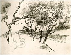Pine Trees along a Road to a House by Vincent Van Gogh  Drawing, Black chalk   Saint-Rémy: October - 5-22, 1889