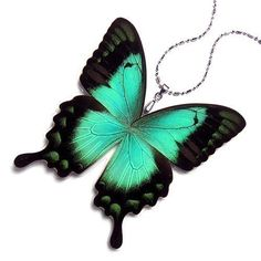 Butterfly necklace (creator says the butterflies are not killed to make the product...) mybugs - etsy