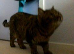 My cat Bella