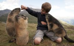 a boy and three marmots