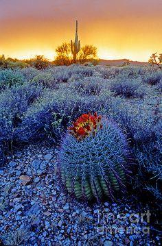 Sonoran desert at dusk. Arizona.