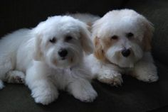 I love it,  they look so cute and are much easier to keep groomed