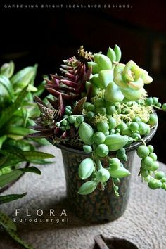 Succulents in their simplicity