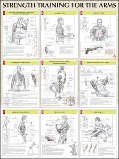 strength training poster - Google Search