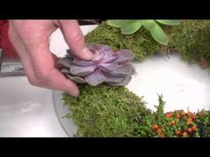 How to Make a Living Holiday Wreath by Mark Addison