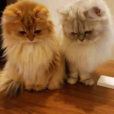 What are these 2 cute creatures looking?  #cats
