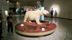 Polar Bear New Museum, Poker Table, Polar Bear, Wrestling, Ideas, Museums, Culture, Lucha Libre, Poker Table Top