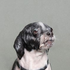 Wet Dog: Bathing Pup Portraits by Sophie Gamand