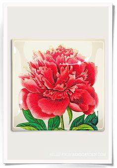 Pink Peony Decoupage Glass Tray | Bensgarden.com