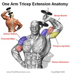 ONE ARM TRICEP EXTENSION The one arm tricep extension is perhaps the best resistance exercise that targets the tricep. This is an isolation exercise that will get those triceps burning. This is a get exercise to incorporate after you have worked chest. Fitness Workouts, Fitness Motivation, Fitness Quotes, Fitness Tips, Fitness Models, Muscle Fitness, Mens Fitness, Health Fitness, Gain Muscle