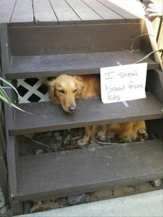 25 Funny Photos Of Dogs Being Shamed For Their Adorable Crimes