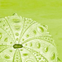 'Lime Urchin' by Karin Grow Graphic Art on Wrapped Canvas in Green