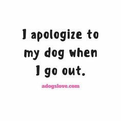 I apologize to my dog when I go out