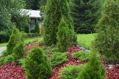 Havupenkki Garden, Plants, Egg As Food, Garten, Lawn And Garden, Gardens, Plant, Gardening, Outdoor
