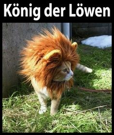 King of the lions