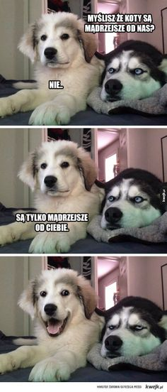 Just a little husky? Check out this list of the best exercises for the Siberian - Funny Husky Meme - Funny Husky Quote - The post Just a little husky? Check out this list of the best exercises for the Siberian appeared first on Gag Dad. Funny Animal Quotes, Cute Funny Animals, Funny Animal Pictures, Funny Cute, Funny Images, Funny Photos, Cute Dogs, Fat Funny, Animal Pics