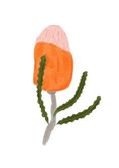 Banksia by Julia Chapman Illustrations Floral Illustrations, Cute Illustration, Botanical Illustration, Flower Mural, Flower Art, Australian Flowers, Leaf Drawing, Unusual Art, Painted Leaves
