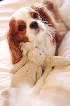 Puppy Baby with her bunny, oh so sweet!