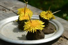 """A sunny picnic table kitchen, set with an assortment of """"mud dishes."""" A wee snail guest, who came to join our (pretend) birthday celebration. Fragrant fresh mint """"salad"""" and chive """"candy"""", harvested just in time for the party."""
