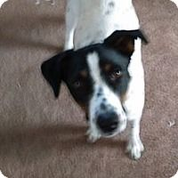 Adopt A Pet :: Senora - Greenville, OH