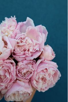 peonies with teal background My Flower, Dried Flowers, Fresh Flowers, Flower Power, Beautiful Flowers, Beautiful Things, Peonies And Hydrangeas, Pink Peonies, Teal And Pink