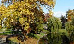 The Lake in Kronenburger Park