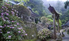 石楠花の名勝 玉置神社 | 十津川村観光協会お知らせ