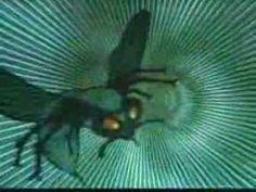 Green Hornet Open