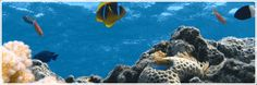 Aquarien, Aquarienbedarf, Aquarienzubehör und Fischfutter Turtle, Animals, Swimming, Pets, Doggies, Aquarium Supplies, Fish Feed, Fish Tanks, Fish