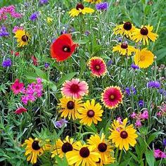 Planted a butterfly and hummingbird wildflower mix in our flower gardens!!!