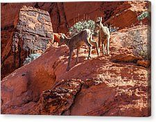 Rocky First Steps Canvas Print by James Marvin Phelps