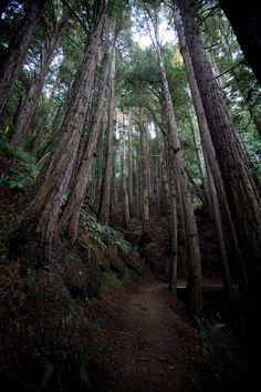 """Path through the trees""   photo by Jan Wellman via Fivehundredpx"
